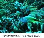 sea fish underwater thailand | Shutterstock . vector #1175211628