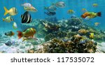 Underwater Panorama On A...