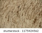 close up common reed  common...   Shutterstock . vector #1175424562