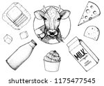 dairy produce hand drawn vector ... | Shutterstock .eps vector #1175477545