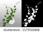 ivy. climbing plant in summer... | Shutterstock . vector #1175532808