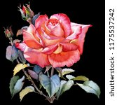 watercolor red rose realistic...   Shutterstock . vector #1175537242