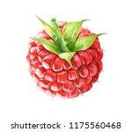 raspberry isolated on white...   Shutterstock . vector #1175560468