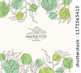 background with macrocystis ... | Shutterstock .eps vector #1175565415