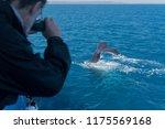 a whale watcher taking a... | Shutterstock . vector #1175569168