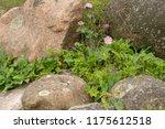 Wild Flowers Growing Among The...