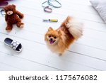 dogs in the middle of mess they ... | Shutterstock . vector #1175676082