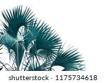 tropical palm leaf isolated on... | Shutterstock . vector #1175734618