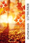 autumn leaves on the sun. fall...   Shutterstock . vector #1175815828
