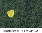 autumn season concept of one...   Shutterstock . vector #1175934865