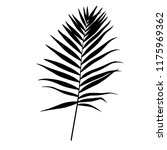 silhouette of a palm leaf ... | Shutterstock .eps vector #1175969362