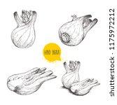 hand drawn sketch style fennel... | Shutterstock .eps vector #1175972212