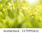 image blurry background and... | Shutterstock . vector #1175992612