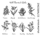 herbs and wild flowers. drawing ... | Shutterstock . vector #1176002362