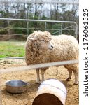 sheep dolly animal | Shutterstock . vector #1176061525