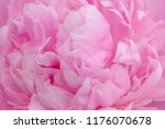 close up of purple peony flower | Shutterstock . vector #1176070678
