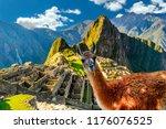 funny scene with llama standing ...   Shutterstock . vector #1176076525