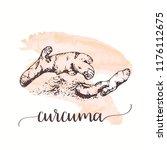 curcuma sketch on watercolor...   Shutterstock .eps vector #1176112675