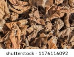 brown leaves texture  autumn...   Shutterstock . vector #1176116092