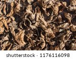 texture of dry leaves  brown...   Shutterstock . vector #1176116098