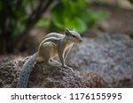a squirrel on the tree trunk... | Shutterstock . vector #1176155995