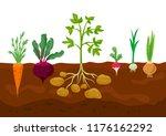 set of different vegetables in... | Shutterstock .eps vector #1176162292