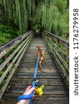 Small photo of Walking a light brown dog on a wooden boardwalk in the woods, first person point of view, dog harness, person hand holding blue leash, dog poop bags