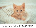 Stock photo little red kitten cat lies on the fluffy carpet at home little kitten sleeps close up of a 1176302158