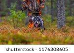 hunting dog seeking prey in the ... | Shutterstock . vector #1176308605