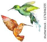 sky bird colorful colibri in a... | Shutterstock . vector #1176346255