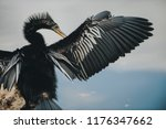 A Cormorant Dries Its Wings...