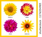 A Set Four Isolated Flowers - Fine Art prints