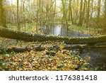 abandoned old park with a pond  ... | Shutterstock . vector #1176381418