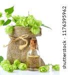 fresh green hops  humulus  in... | Shutterstock . vector #1176395962