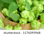 fresh green hop cones  humulus  ... | Shutterstock . vector #1176395968