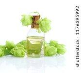 hop cones  humulus  with... | Shutterstock . vector #1176395992