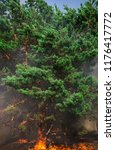 fire. wildfire  burning pine... | Shutterstock . vector #1176417772