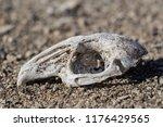 rabbit skull in naturebones ...   Shutterstock . vector #1176429565