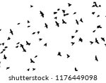 a flock of flying birds. vector | Shutterstock .eps vector #1176449098