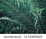 beautiful of palm tropical... | Shutterstock . vector #1176509605