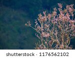 natural view background of...   Shutterstock . vector #1176562102