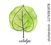 vector leaf of catalpa tree at...   Shutterstock .eps vector #1176581878