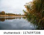 golden autumn reeds. bright...   Shutterstock . vector #1176597208
