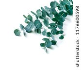 eucalyptus isolated on a white... | Shutterstock . vector #1176600598
