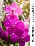 Purple Orchid Flower  - Fine Art prints