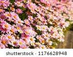 colorful margaret flower... | Shutterstock . vector #1176628948