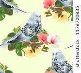 seamless texture budgerigar ... | Shutterstock .eps vector #1176720835