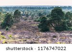 hilly moorland with blooming... | Shutterstock . vector #1176747022