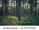 tree trunks in pine woods. | Shutterstock . vector #1176747025