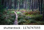 small pathway in summer forest... | Shutterstock . vector #1176747055